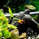 Fish Live Wallpaper HD 2 by Andu Dun
