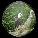 Bald Eagle Wallpaper by House Media