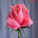 Розы из бисера by KitchenProStudio