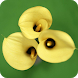 Callas Wallpapers by Dabster Software