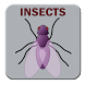 Insects by Master and Bull Digital Arts
