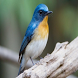 Puzzle Slide Burung Cantik by Hendry Dev