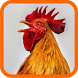 Laughing Chickens by Asfa Labs