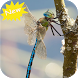 Dragonfly wallpaper by Seaweedsoft