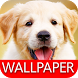 Wallpaper Dog Collection by peso.apps.pub.arts