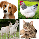 Animal Sounds for childs (6-12) by www.turkishandroid.com