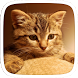 One Cat Theme by Heartful Theme
