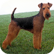 Airedale Terrier Wallpapers HD by PikasApps