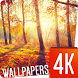 Autumn Wallpapers 4k by Ultra Wallpapers