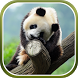 Cute Panda Live Wallpaper by Live Wallpapers 3D