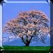 Sakura Live Wallpaper by My Live Wallpaper