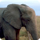 African Animals - Wallpapers by Hojasoft, LLC
