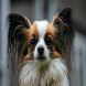 Cute Dog Wallpapers by Agaba Brian