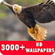 Eagle Live Wallpapers HD by HD Live Wallpaper & Prank App