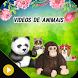 Videos de animais by Apps Frases e Amor