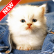 Baby Animal Pictures by Pinza