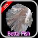 430 Betta Fish by IrfanDroid