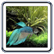 Betta Fish Live Wallpaper by Appy.Horse