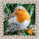 Robin Birds Sounds by Godev Houz