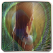 Peacock Feather Photo Frame by Tocus App