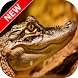Alligator Wallpapers by Fresh Wallpapers