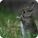 Little Rabbit Wallpaper by WallpapersCompany