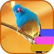 Birds Theme and Launcher by Theme land