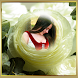Rose Flower Photo Frame by Studio Photo Apps