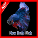 New Betta Fish by gozali