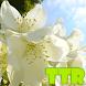 jasmine live wallpaper by TTR