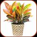 House Indoor Plants by buzjabuzja