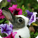 Bunny Wallpaper by DreamWallpapers
