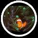 MiUI Clown Fish Live Wallpaper by Sub Nation
