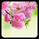 Sakura Live Wallpaper by Wallpaper qHD