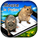 3D Mouse In Phone Prank by Luxurious Prank App