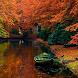 autumn live wallpaper by Dark cool wallpaper llc