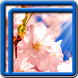 Sakura Tree Live Wallpapers by Blue Live Wallpapers
