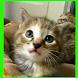 لغز لطيف القطط فيديو! لعبة by PTOWNGAMES
