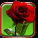 Roses Live Wallpaper by Live Wallpaper HD 3D