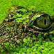 alligator wallpapers by Dark cool wallpaper llc