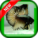 Cool Betta Fish Wallpapers by Jojodev