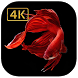 Betta fish 4K wallpaper Iphone style for Android by D-Create-Dev