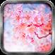 Pink Sakura Live Wallpaper by Memory Lane
