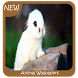 Animal Wallpapers by GoDream Studio