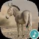 Appp.io - Donkey Sounds by Appp.io