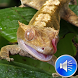 Gecko Sounds Ringtones by msd developer multimedia