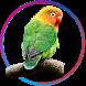 Kicau Lovebird Pemikat by Portal Apps