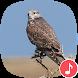 Appp.io - Peregrine Falcon Sounds