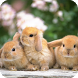 Rabbit Live Wallpaper by GlobalWallpapers