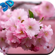 Cherry Flower Live Wallpaper by CharlyK LWP